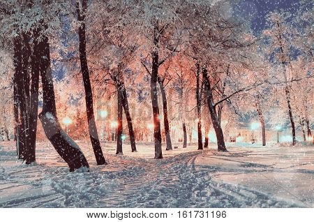 Winter night landscape - winter park under falling winter snowflakes, colorful winter night scene of snowy winter trees in the night - winter night landscape background