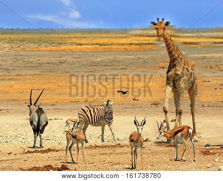 Vibrant Waterhole in Etosha National Park with Giraffes, Impala, Gemsbok Oryx, Namibia, Southern Africa