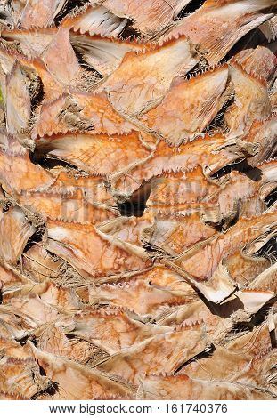 The fibrous texture of the bark palms. Africa.
