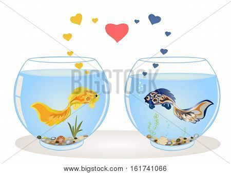 Two cute fish in love, they are swimming in different aquariums, look at each other. Romantic feeling concept. Greeting card with Valentine's day, the recognition in infatuation. Vector illustration.