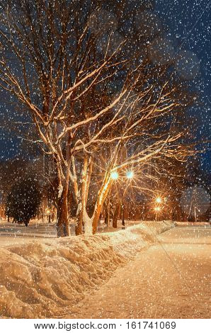 Winter night park. Winter night landscape - winter alley with falling winter snowflakes, colorful night winter alley with winter snowfall