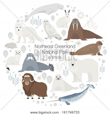 Polar animals. Vector collection of animals .Polar bear, narwal, whale, musk ox, seal, walrus arctic fox ermine