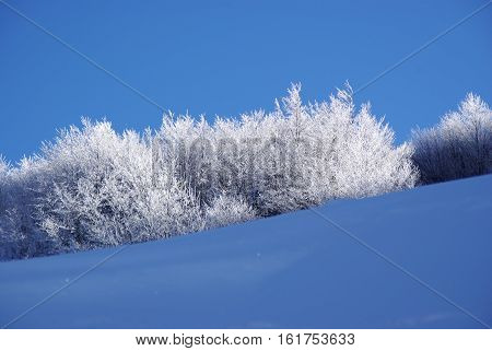 Iced branches in the italian appennines, Sestola