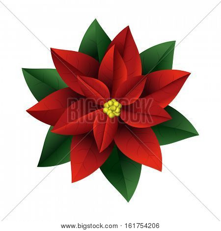 Poinsettia flowers Christmas symbols. Vector illustration