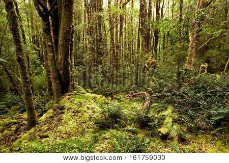Moss Covered Forest