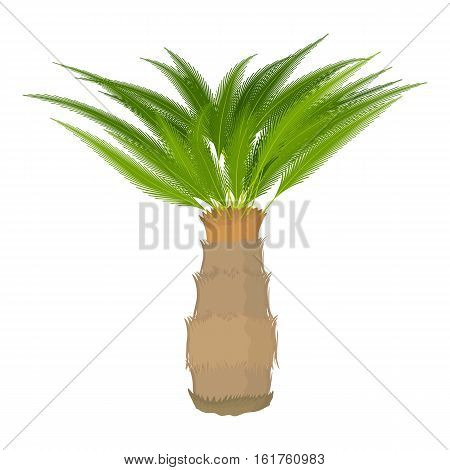 Cycas palm icon. Cartoon illustration of Cycas palm vector icon for web