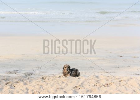 Little Dog On the beach of Thailnd