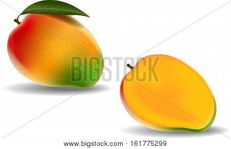 Vector illustration of Fresh mango isolated on white background
