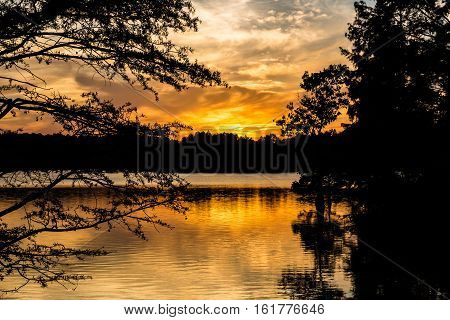 Sunset through Bald Cypress trees at Stumpy Lake in Virginia Beach, Virginia.