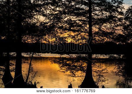Orange glow of sunset as seen through Bald Cypress trees at Stumpy Lake in Virginia Beach, Virginia.
