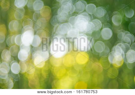 Nature Green Bokeh Sun Light Abstract Background.