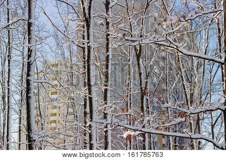 Park with deciduous trees covered with snow against the modern multi story apartment building