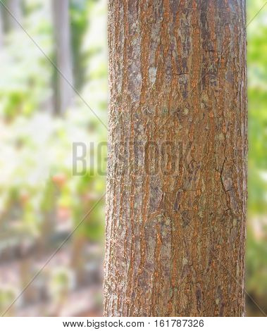 Tree trunk with blur nature background on sunny day