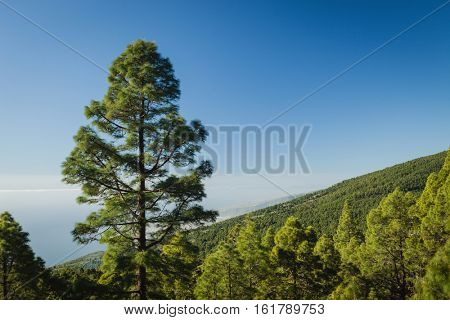 Mountainside with lots of vegetation and a blue sky of background