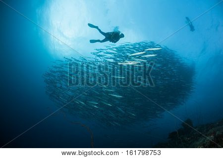 Diver Coral Life Diving Sudan Soudan Red Sea Safari