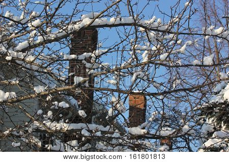 Fresh White snow clings to tree branches with backdrop of town homes and blue sky