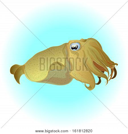 Cuttlefish drawing. Edible marine mollusk with tentacles isolated on white background.