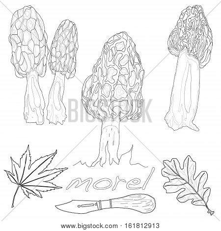 Morel Mushroom Vector