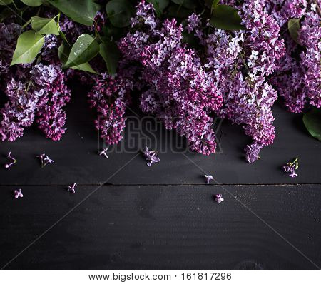 lilac branch on a black background. blooming branch of lilac (Syringa). The beautiful lilac on a black wooden background