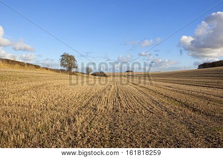 Harvested Field Patterns