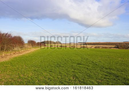 Wheat Crop And Scenic Farmland