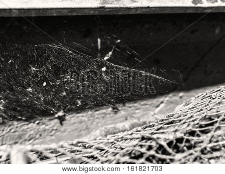 Web and network at sunny summer weather in black and white