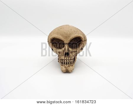 Alien skull head face to camera and white background.