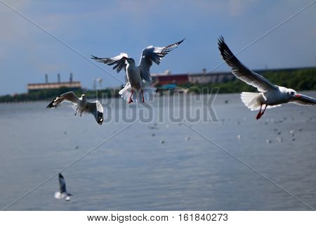 Among the birds. Eat flying over the river.
