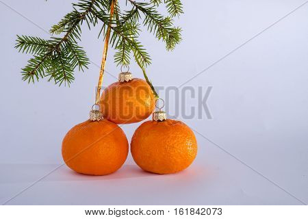 Three fresh mandarins and fur-tree branch on a white background as Christmas decoration to create holiday spirit