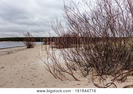 landscape on the sandy shores of the Baltic Sea
