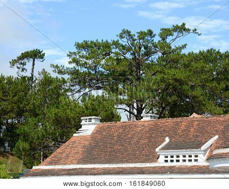 Old Red Tile Roof Top With A Forest View