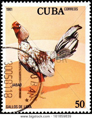 CUBA - CIRCA 1981: A stamp printed by Cuba shows the Cock Jabao, from the series Fighting Cocks