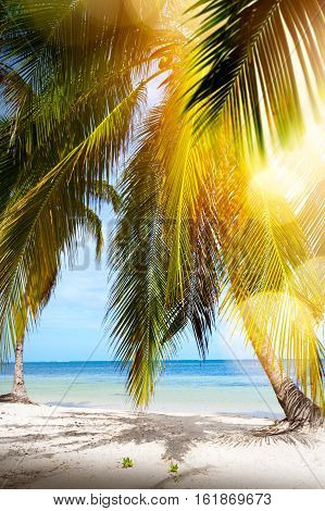 art Summer tropical Beach; Peaceful vacation background
