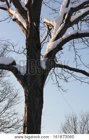 Fresh white snow on trees with beautiful blue sky