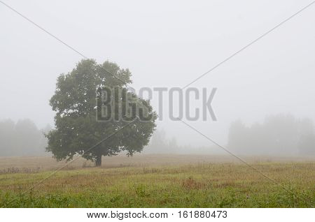 morning over a field with a single tree and fog in the distance