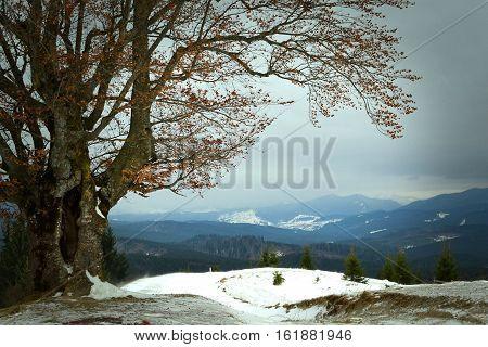 The lonely tree on the mountain peak. Winter landscape. Ukraine Carpathian mountains.