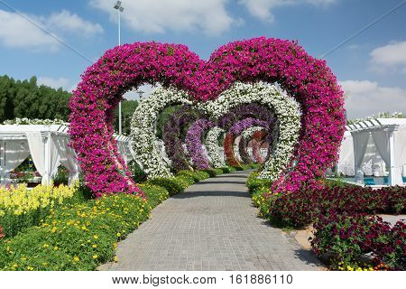 DUBAI, UAE - DECEMBER 8, 2016: Dubai Miracle Garden: The world's biggest natural flower garden.