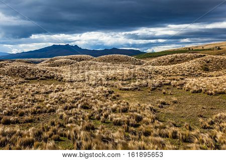 Several volcanic hills covered with grassland in the highlands of Cotopaxi National Park