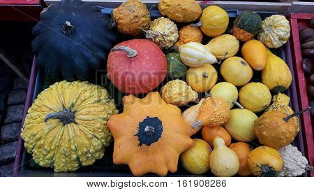 Assorted pumpkins in Sergels Torg, Stockholm Sweden