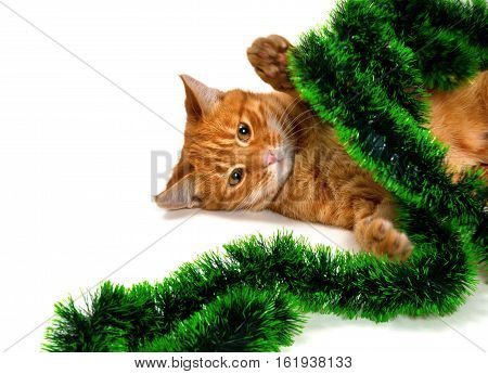 Red-headed kitten lying on its side in Christmas ornaments. Isolated on white background.