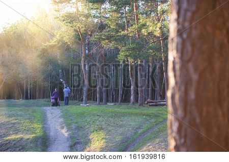 happy family walking in the summer forest