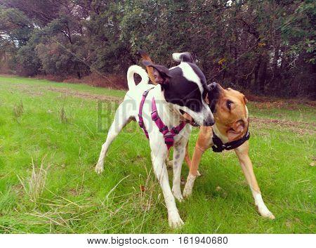 Perros jugando en medio del campo con el palo.