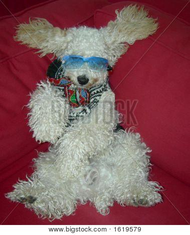 Stylish Model Dog