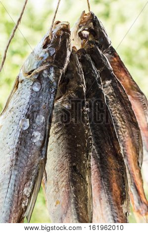 Dried fish with beer, roach. Close up