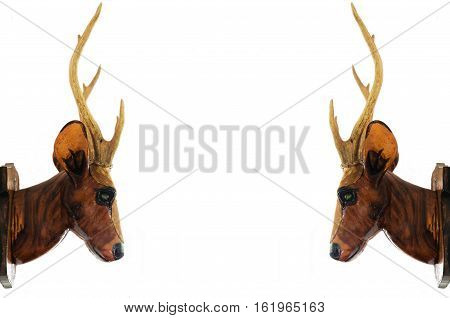 Two Deer head isolated on white background