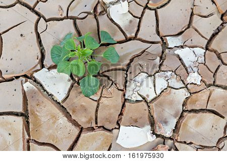 Seedlings sprout growing on land with dry and cracked ground