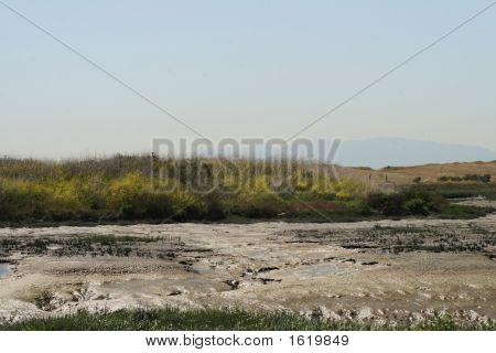 Baylands Marsh
