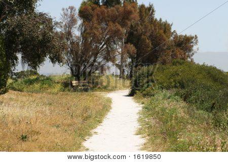 Baylands Path