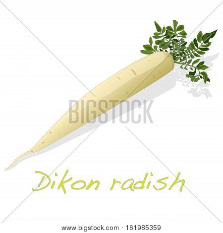 White radish. Dikon. Isolated on white background.