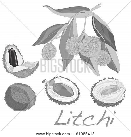 Lychee (Litchi chinensis) on white background .